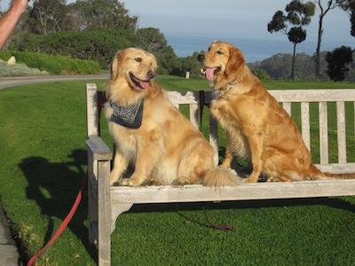 Buspar reviews | Buspar weight gain | Home - My Doggie Says